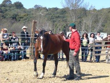 Equitation éthologique et haute école à Montpellier