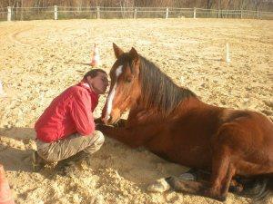 Bruno Marchal équitation éthologique Montpellier hérault éthologie débourrage comportement des chevaux
